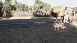 Black people with donkeys carrying hay Footage