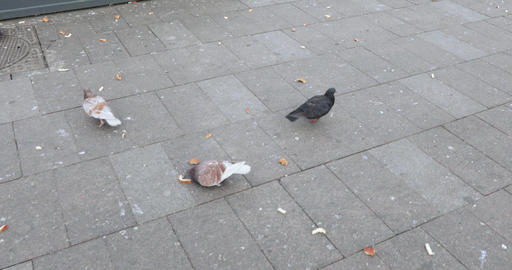 Pigeons peck bread on asphalt Footage