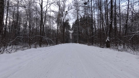 Snowy Forest Road Live Action