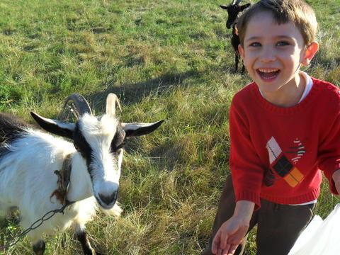 boy feeding goat フォト