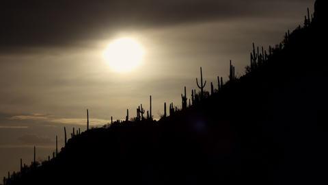 Sun Cactus And Flora At Saguaro National Park Arizona USA Live Action