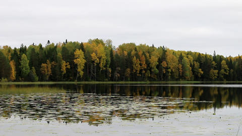 Rich range of colors of autumn forest on shore of quiet foggy lake Live Action