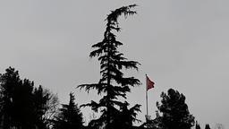 pine tree and flag Footage