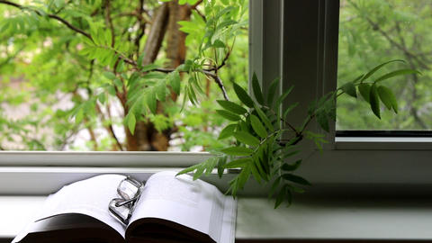 Open book, glasses, mountain ash branch in open window Live Action