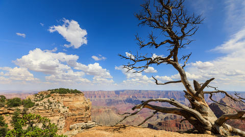Time Lapse At The North Rim Of The Grand Canyon Live Action