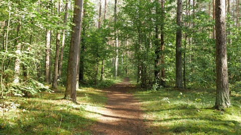 Personal perspective of walking on a path in the forest Live Action