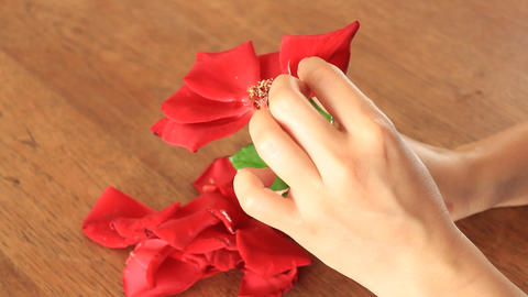 Broken Heart Girl Picking Rose Petals Footage