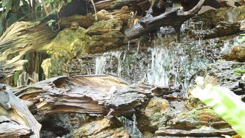 Lush green tropical garden waterfall ビデオ