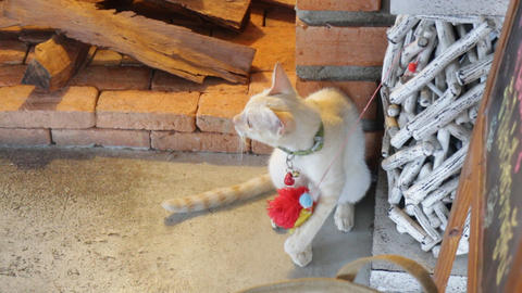 Young cat playing toy in the local cat cafe Stock Video Footage