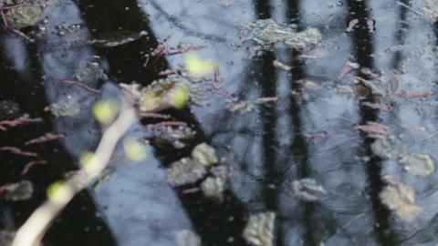 Fresh sprout above the stagnant water Stock Video Footage