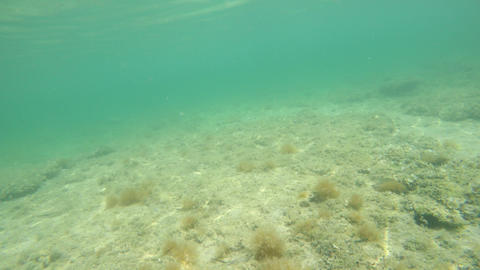 Underwater view of Alghero blue sea Footage