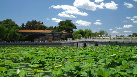 Chinese garden in Beijing - famous public park Beihai Park Footage