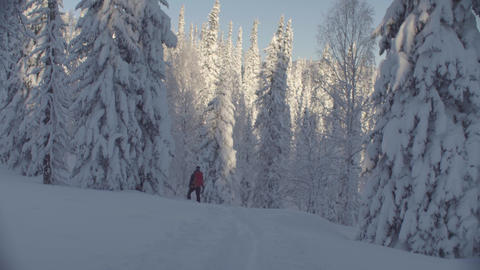 Skitour in Siberia. A man standing on the hill in a snowy forest Live Action