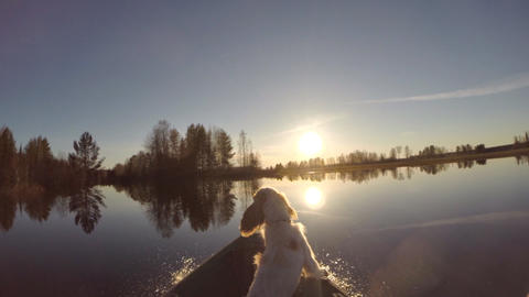 Dog is Floating on Lake Boat Stock Video Footage