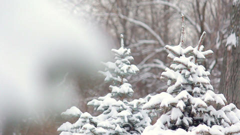 Fir-tree in snow Stock Video Footage