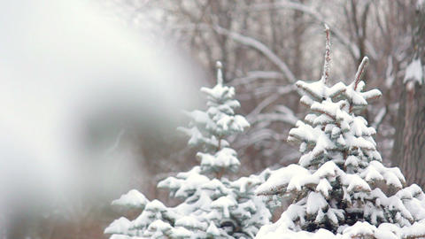 Fir-tree In Snow stock footage