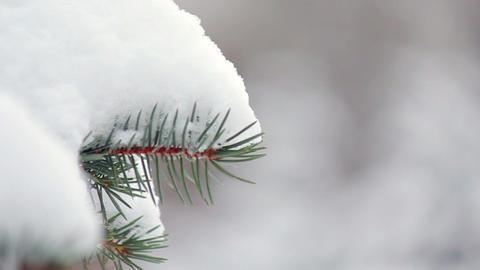 Fir-tree in snow Stock Video Footage