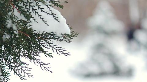 Snowy fir tree in park Stock Video Footage