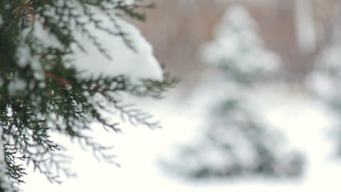 Snowy fir tree in park Footage