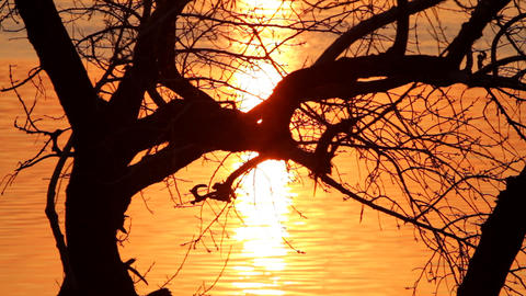 Tree Silhouette In Sunset Paints. stock footage