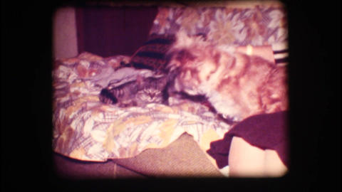 Vintage 8mm. Woman petting dog and cat Stock Video Footage