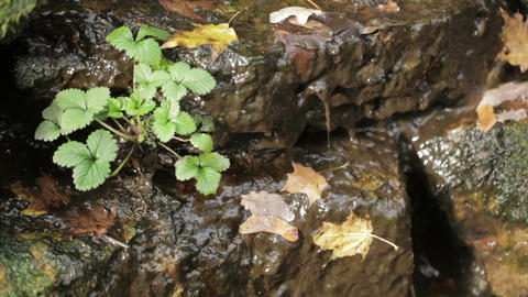 Drops of rain drops from the rocks in the city Park Stock Video Footage