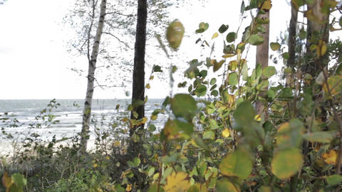 Squally wind on the shore. Heavy Baltic sea Stock Video Footage