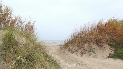 Grass on the Baltic sea coast. Windy weather. Wide shot Footage