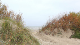 Grass on the Baltic sea coast. Windy weather. Wide shot Stock Video Footage