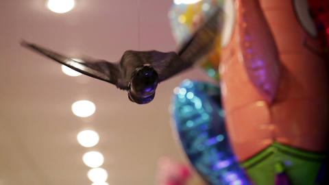 Bat in the toy shop Stock Video Footage