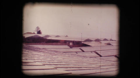 Vintage 8mm. Greenhouses used for flower cultivati Stock Video Footage