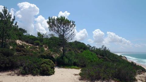 Walk Through Wooded Hills near Shore Ocean Footage