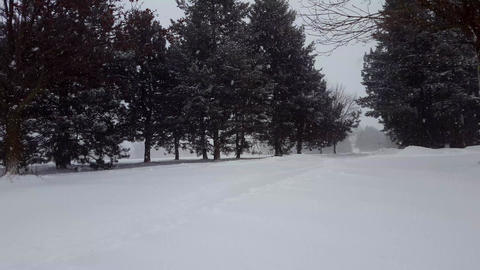 Snow Storm Blizzard With Evergreen Trees. Snowing Nature Scene With Tree Area. Footage