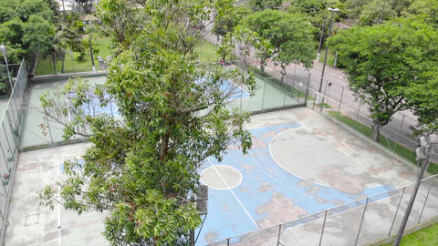 A Big Tree Moving In Front Of a Faded Blue Tennis Court - Moving To Left Live Action