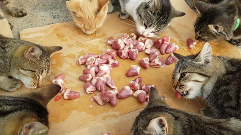 several fluffy homeless cats eat chicken meat Stock Video Footage