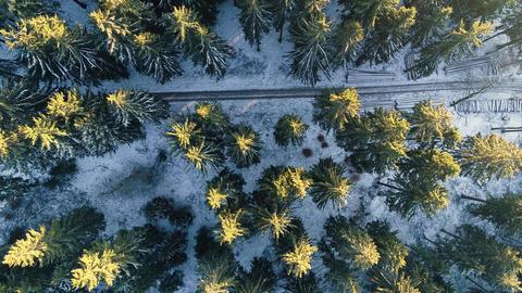Illuminated treetops - aerial view Footage