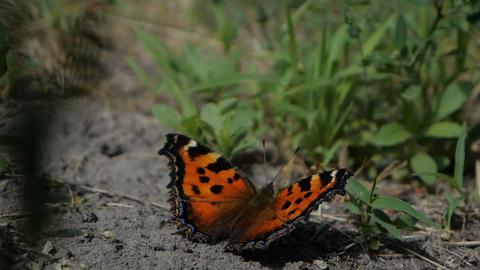 Beautiful butterfly open her winds in slow motion ビデオ