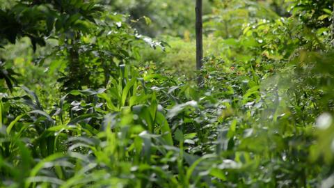 Africa Organic Farm, Close Up stock footage