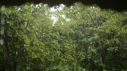 Raining in the farm Footage