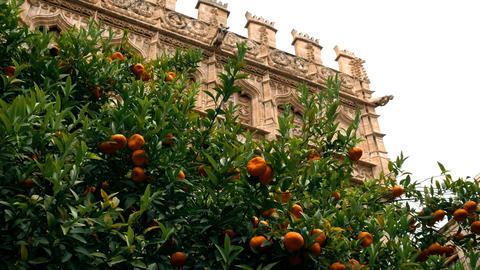 Silk market, interior garden in Valencia, Spain Stock Video Footage