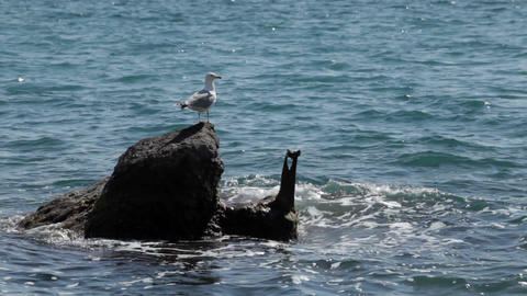 Bird a seagull sits on a stone by the sea Footage