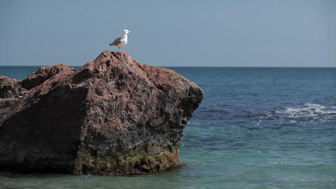 Bird a seagull sits on a stone by the sea GIF