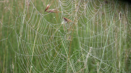 A spider inside his web in a misty morning Footage