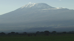 Elephants and kilimanjaro Footage
