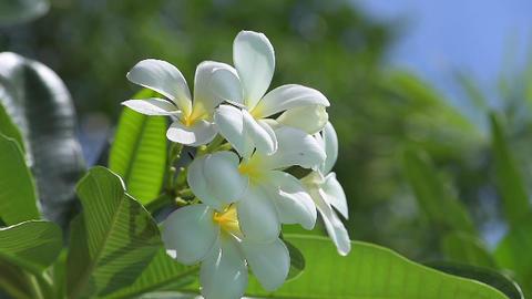 Flower Footage