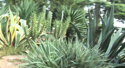park tropical plant Footage