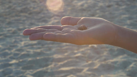 Sea shell in the palm of your hand Footage