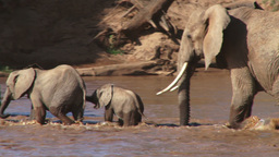 Elephant mother helps a baby to cross a river Footage
