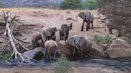 Elephants in a waterhole Footage