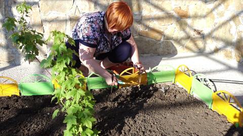 Woman Gardener Footage